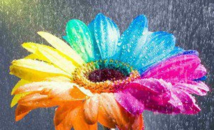 Клумба квітів