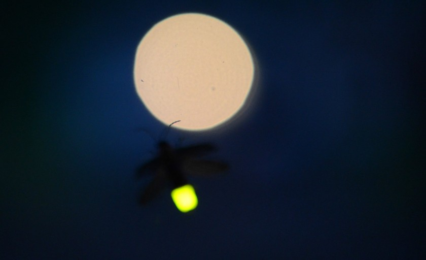 Світлячок