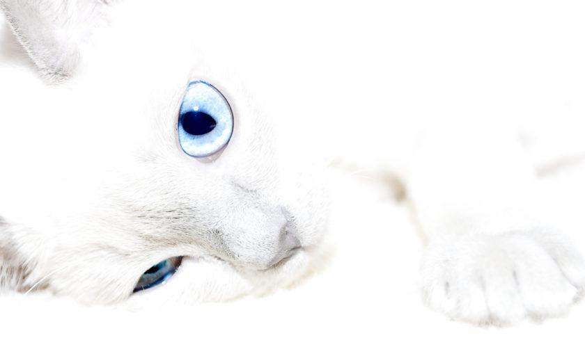 Пригоди білого кота