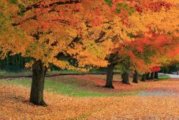 Осінь без смутку