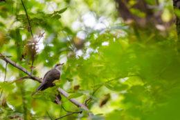 Про що співають птахи?