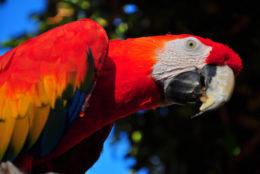 Папуга і Ластівка
