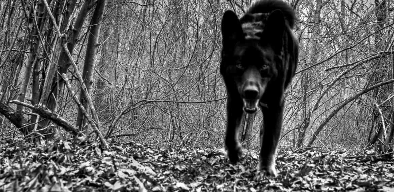 Казка про звіра в лісі